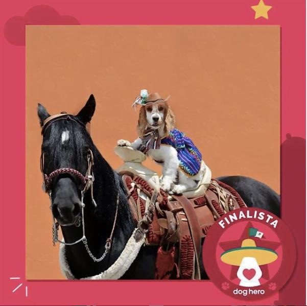 DogHero tiene nueva imagen, Noori una perrita muy mexicana