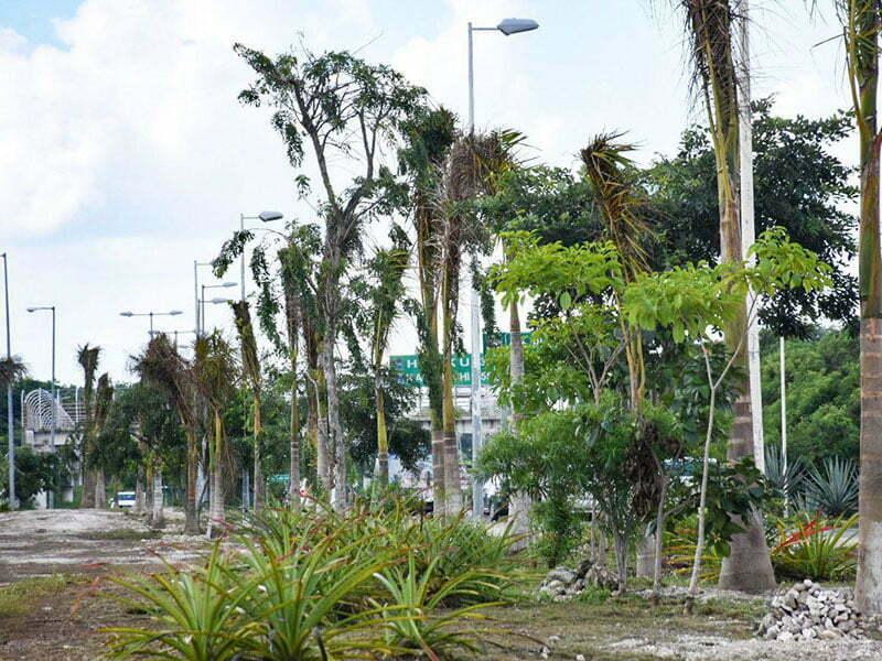 Realizan jornada de reforestación en camellón de la carretera Federal