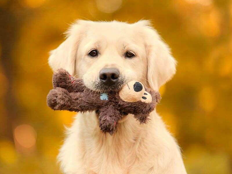 10 errores principales que cometen los dueños de perros