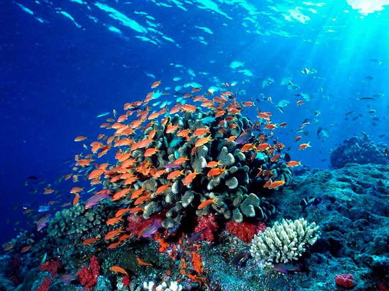 Sin trampas, urge cumplir el Protocolo de Cartagena para salvar arrecifes