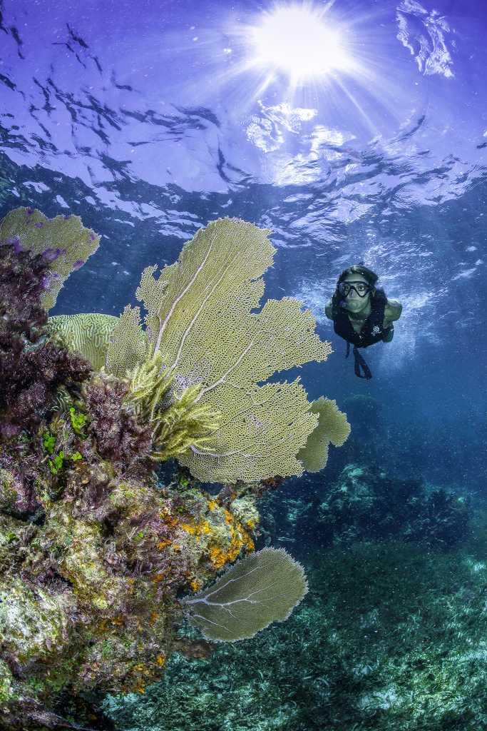 Alltournative: destino ecoturístico obtiene reconocimiento como 'Empresa Verdes 2020'